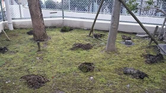 施肥作業(肥料入れ)